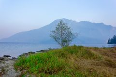 Single tree stands on edge of lake against mountain background. Lake in early eavening with rocky shoreline grass and single tree royalty free stock photography