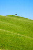 Single tree stands on the hill Royalty Free Stock Photography