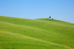 Single tree stands on the hill Royalty Free Stock Photos