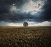 Single tree and storm clouds. A single tree in a field under dark storm clouds royalty free stock photos