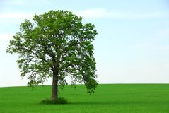 Single tree summer. Single tree in summer horizontal stock photography