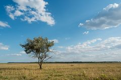 Single tree in summer green grass field landscape clouds blue sky. Steppe stock photography