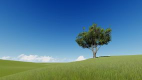 Single tree on a summer meadow stock footage