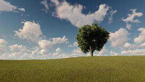 Single tree on a summer meadow. Single tree on a green summer meadow stock video footage