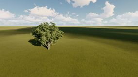 Single tree on a summer meadow. Single tree on a green summer meadow stock footage