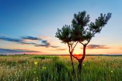 Single tree, sunset Royalty Free Stock Photo