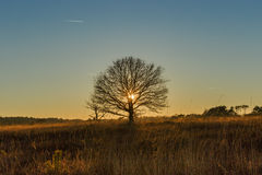 Single tree at sunset Stock Images