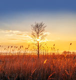 Single tree, sunset Royalty Free Stock Photography