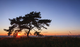 Single tree at sunset Royalty Free Stock Photo