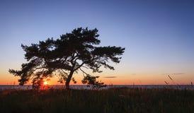 Single tree at sunset royalty free stock photo