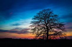 Single tree after sunset Royalty Free Stock Photo