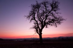 Single tree after sunset with violet skies, Pfalz Stock Photos