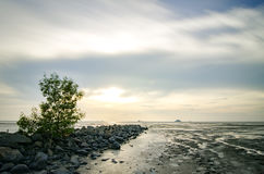 Single tree surrounded by stone at coastline with colorful sunset background during low tide water Royalty Free Stock Images