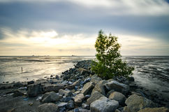 Single tree surrounded by stone at coastline with colorful sunset background during low tide water Royalty Free Stock Photography
