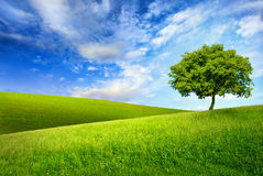 Single tree on top of a green hill. Scenic paradise with a single tree on top of a green hill, blue sky and white clouds and another hilly meadow in the stock photography