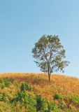 Single tree on top of hill with clear blue sky Stock Photos