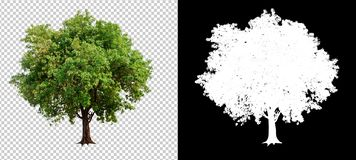 Single tree on transparent picture background. With clipping path, single tree with clipping path and alpha channel on black background stock images