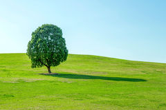 Single tree,Tree in field and blue sky.Olympic park in korea. Stock Image