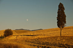 A single tree in tuscan countryside Stock Images