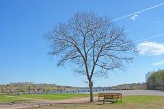 Single tree at Volkhov river shore Royalty Free Stock Photos
