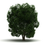 Single Tree stock images