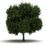Single Tree Stock Image