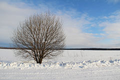 A single tree on a white snowy field. Winter. Royalty Free Stock Photography