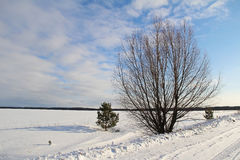 A single tree on a white snowy field. Winter. Stock Photo