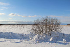 A single tree on a white snowy field. Winter. Stock Photography