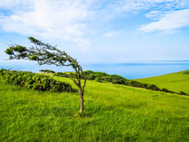 Single tree in windy day Royalty Free Stock Photography