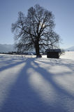 Single tree in winter Royalty Free Stock Images