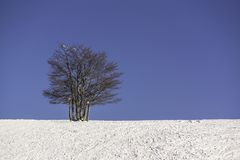 Single tree in winter with blue sky - horizontal Royalty Free Stock Image