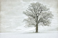Single tree in winter covered with hoarfrost Royalty Free Stock Photos