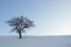 Single tree in a winter landscape. And blue sky Royalty Free Stock Photo