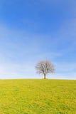 Single tree in winter sun Stock Photography