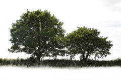 single treen Royaltyfri Bild