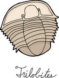Single Trilobite Drawing Royalty Free Stock Image
