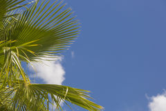 Single Tropical Palm Trees Against Blue Sky and Clouds Stock Photos