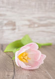 Single tulip on a wooden table Stock Image
