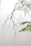 Single twig in forest mist Royalty Free Stock Photos