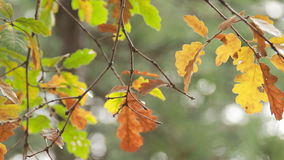Single twig with green and wilted leaves in the wind stock footage