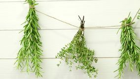 Single twigs of Thyme and Rosemary stock video