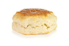 Single, uncut scone. On a white background Stock Photography