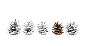 Single unpainted fir cone within several white painted cones