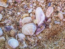 Mixed empty molluscan seashells and sand on a Black Sea beach at Primorsko, Bulgaria. Single valves of bivalve mollusks, other parts of seashells and sand on a royalty free stock photo