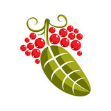 Single vector flat green leaf with tendrils and red seeds. Herba Royalty Free Stock Photography