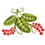 Single vector flat green leaf with tendrils and red seeds. Herba Stock Images