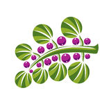 Single vector flat green leaves with purple berries or seeds. He Stock Images