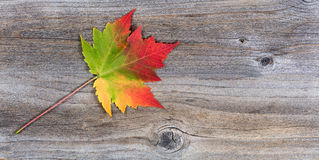 Single vibrant autumn maple leaf on rustic wood Stock Photo