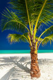 Single vibrant coconut palm tree on a white tropical beach Royalty Free Stock Images